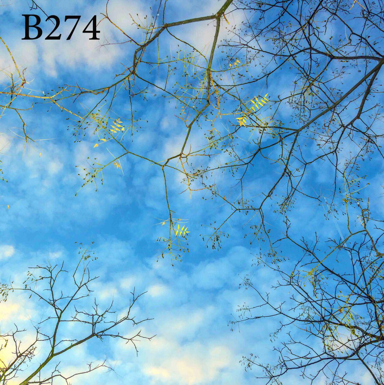 photo_۲۰۱۸-۱۲-۱۵_۱۲-۱۳-۵۵
