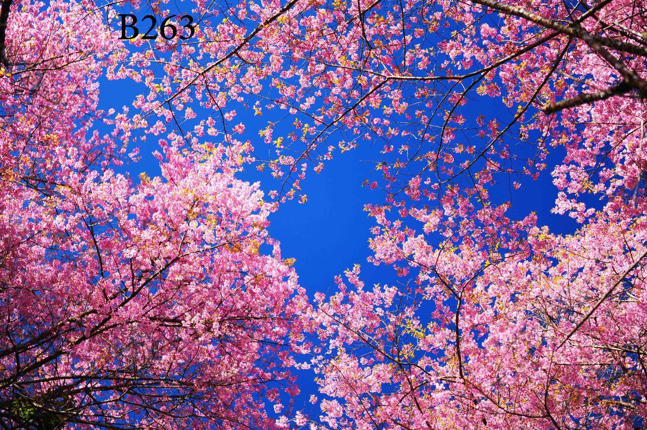 photo_۲۰۱۸-۱۲-۱۵_۱۲-۱۴-۰۹